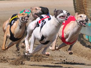 bet on greyhounds racing